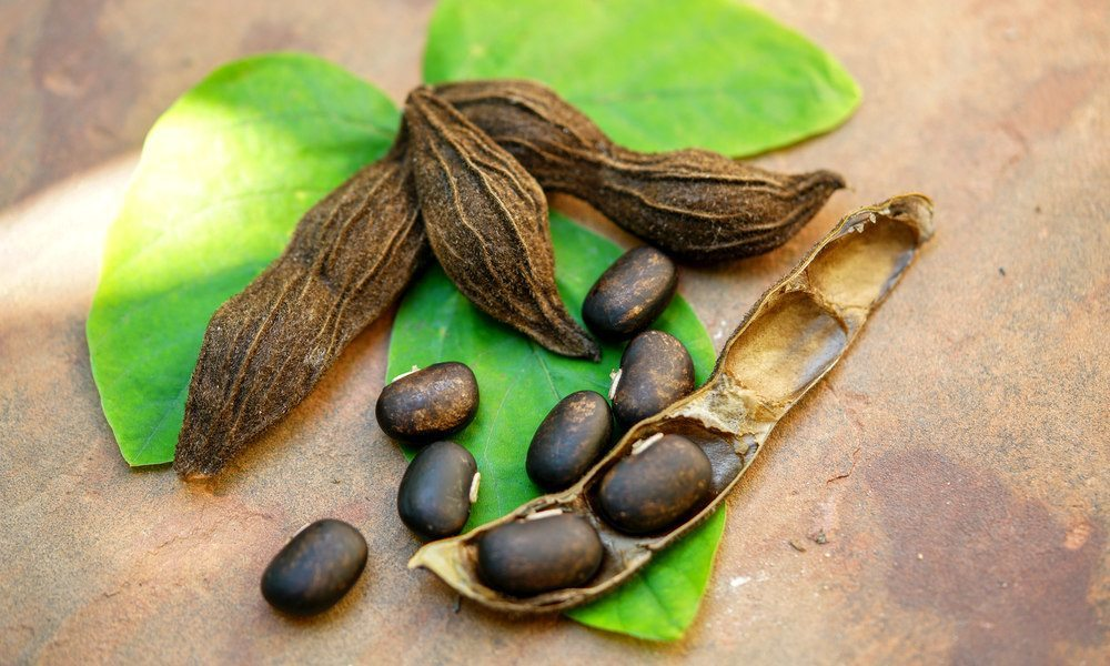 Can Velvet bean (Mucuna-pruriens) Be Used To Treat Parkinson's Disease And Depression?